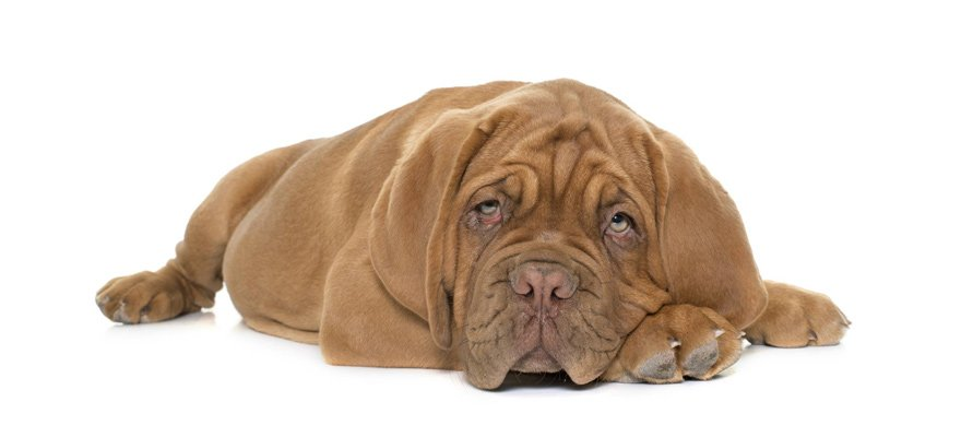 novox meds for dog