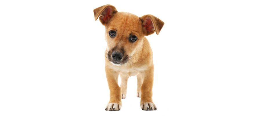 pet flea protection