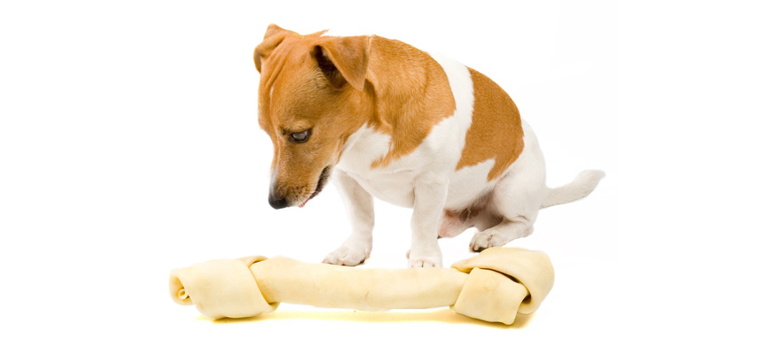 rawhide for dogs