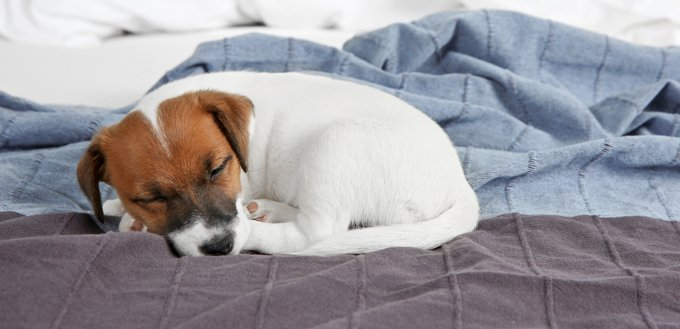 stomach ache in dogs