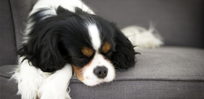 stomach pain in dogs