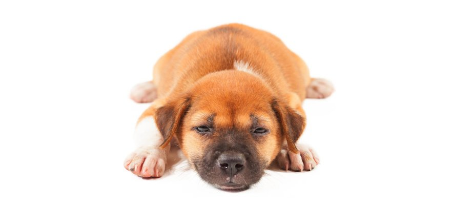 symptoms of canine pancreatitis