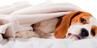 tips to cure dogs upset stomach