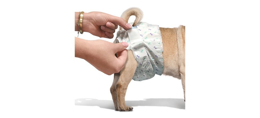 types of dog diapers