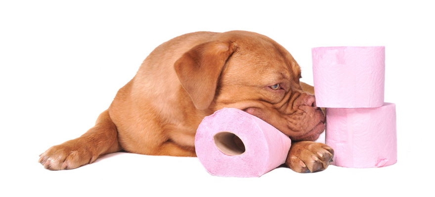 types of dog diarrhea