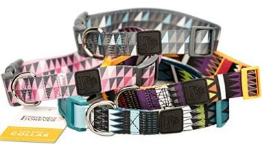 Dog Collar with Pattern by Friends Forever