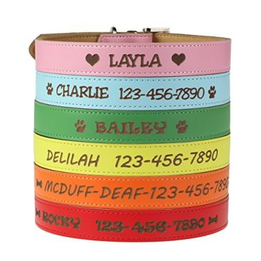 Personalized Dog Collar by Custom Catch