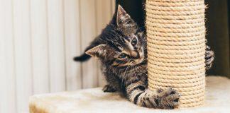 best cat scratching tower