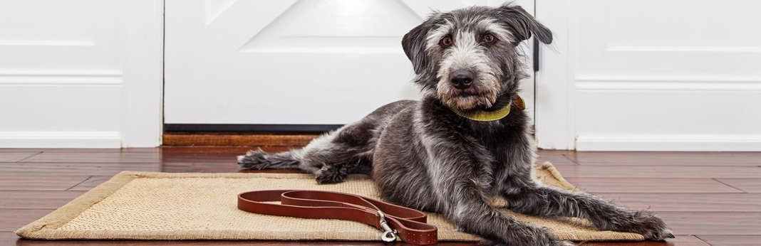 Best Electronic Dog Door Buying Guide 2018