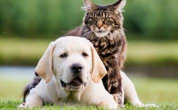 best pet insurance