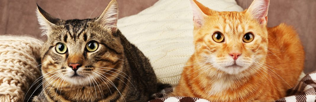 Can Cats Boost Your Immune System