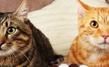 best probiotics for your cat