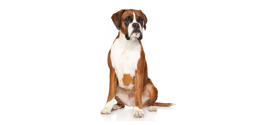 Raw Food Recipes For Boxers