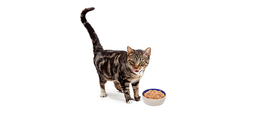 Best Wet Cat Food Review Guide 2019
