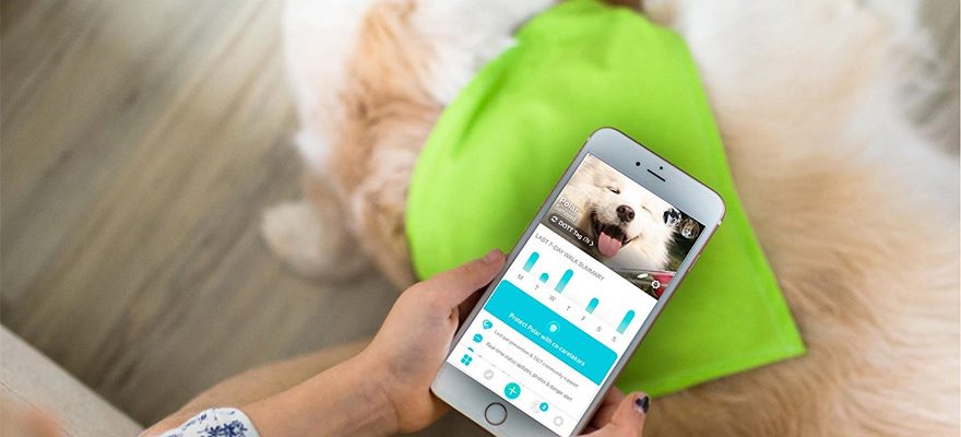 Best Gps Bluetooth Tracker For Your Dog