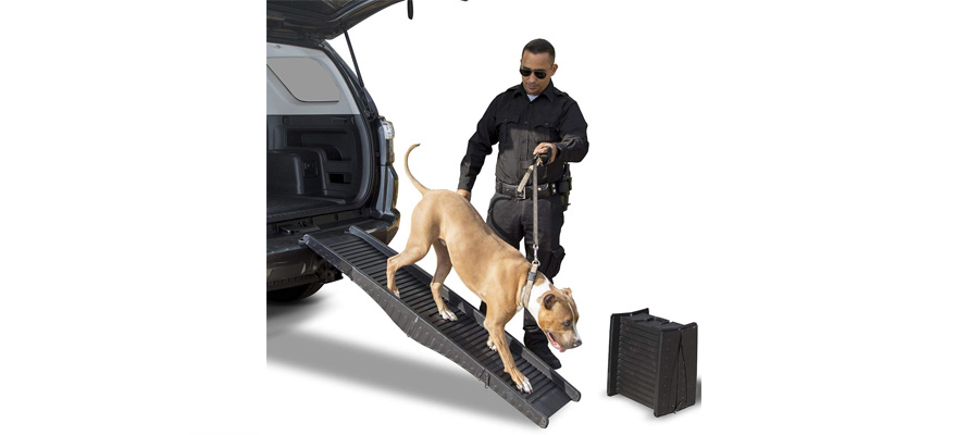 ramp for dog