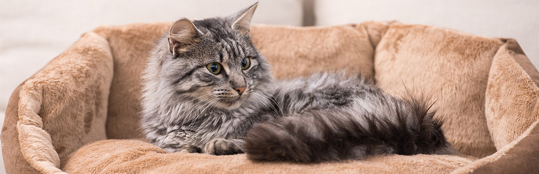 top-10-tips-to-keep-your-cat-healthy
