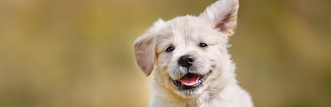 what dog vitamins are best for skin problems