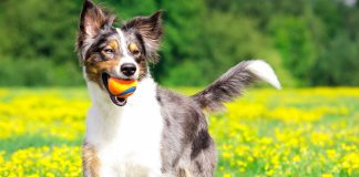 5 tips to prevent sunstroke in dogs
