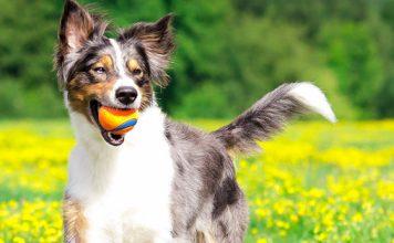 5 tips to prevent sunstroke in dogs