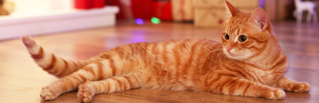 how-to-make-your-cat-feel-more-comfortable-at-home