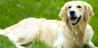 Best Rated Feal And Tick Treatment For Dogs