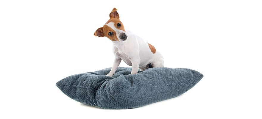 indestructible bed for dogs