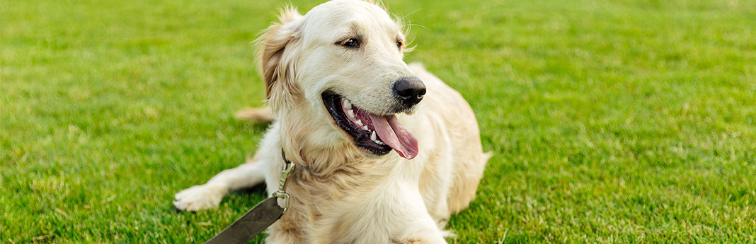 5-tips-to-help-your-dog-lose-weight