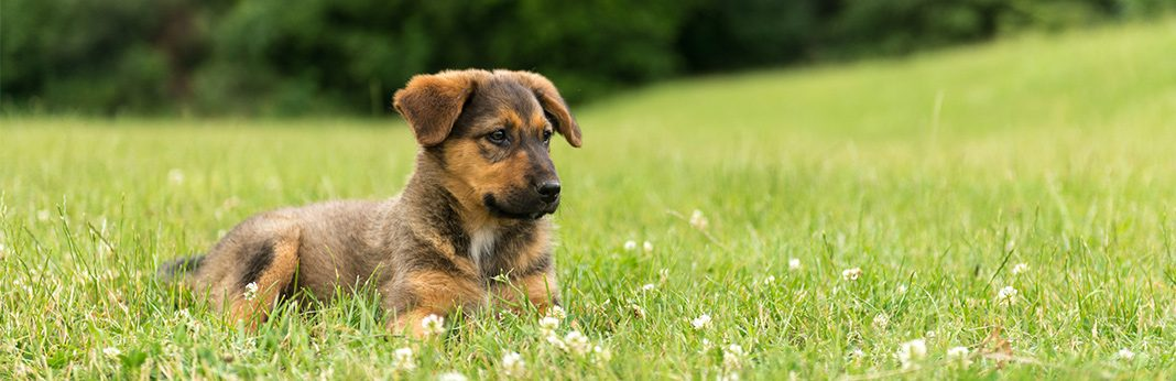 7 steps to keep your dog in yard without a fence