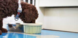 8 Dog Safe Peanut Butter Treats