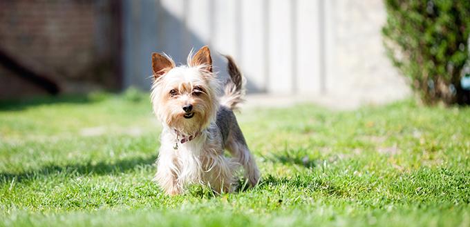 庭にいる小型の雑種犬