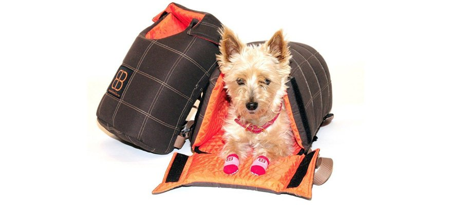backpackers for dogs