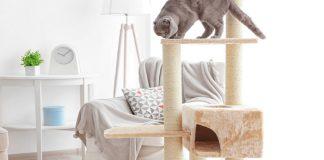 best cat condo