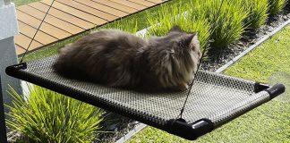 best cat window perches