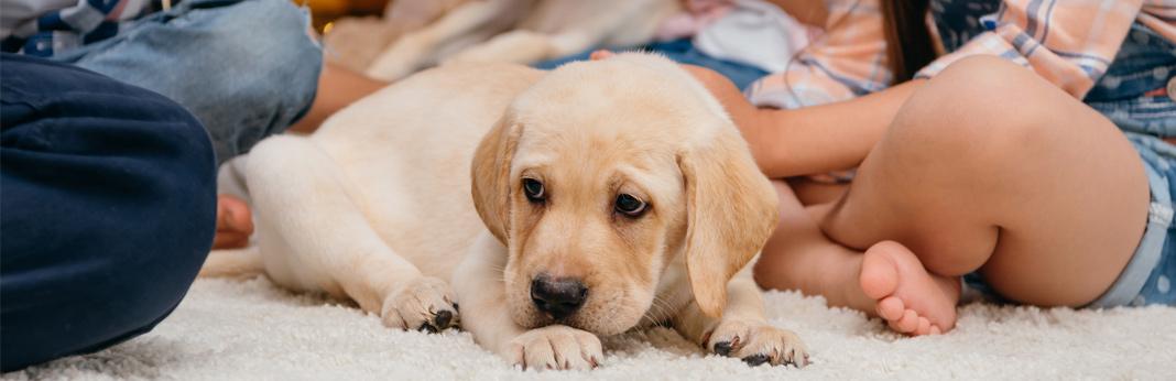 best-dog-breeds-for-kids
