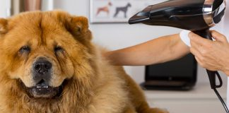best dog dryers for home grooming