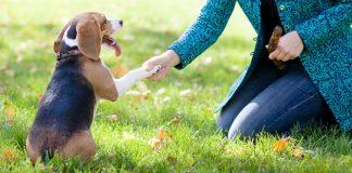 Can I Give My Dog Piriton?