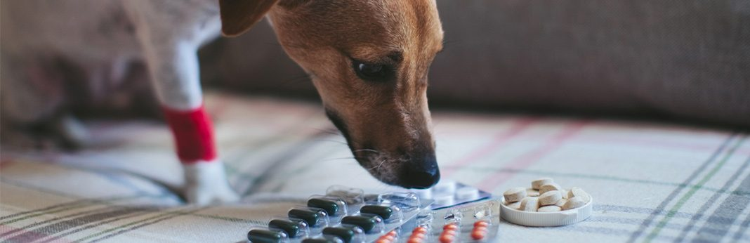 can you give paracetamol to dogs
