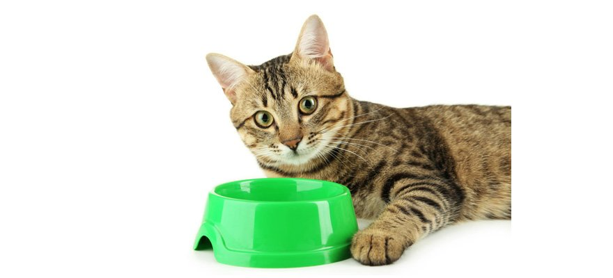 Good Cat Food For Senior Cats