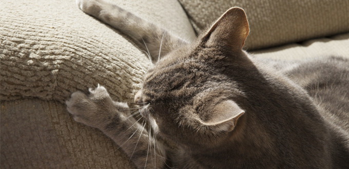 In The Following Post We Will Outline 5 Great Tips To Prevent Your Cats From Scratching Furniture That You Can Put Into Action Today