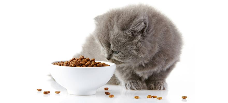 cat vitamins