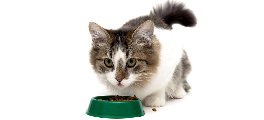 cats vitamins