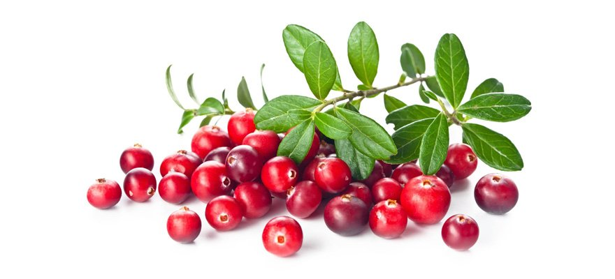 cranberry-supplements for canine