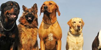 dog breeds with a strongest bite