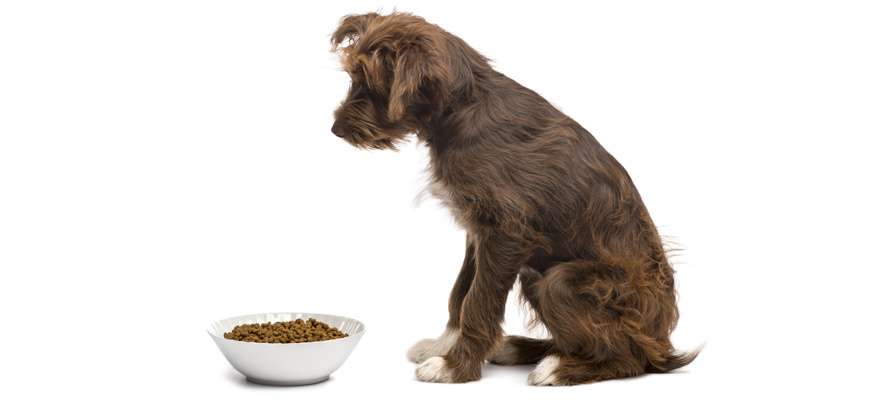 dog food low protein