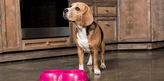 dog food supplements