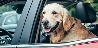 dog home travel supplies
