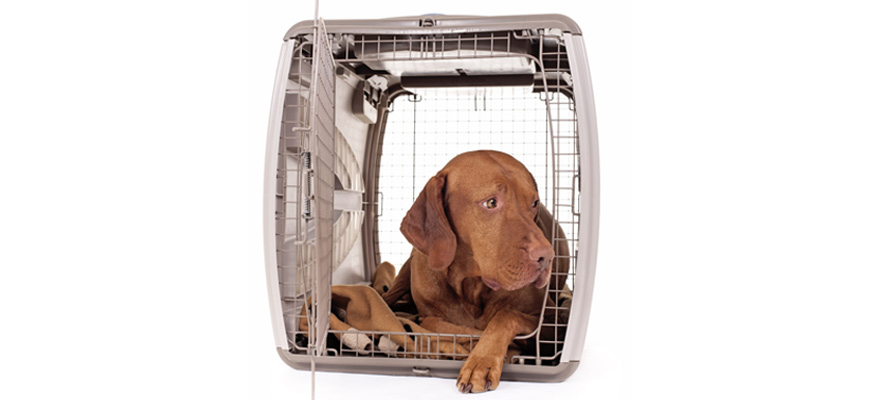 dog in his crate