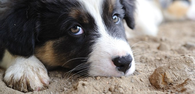 fluoxetine dog's medicine