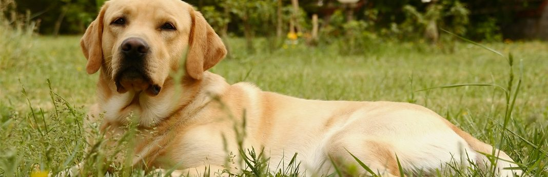 fluoxetine for dogs - uses and side effects